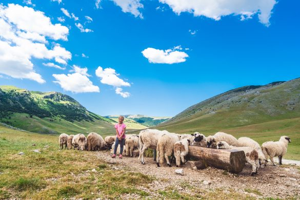 Young shepherdess with sheep