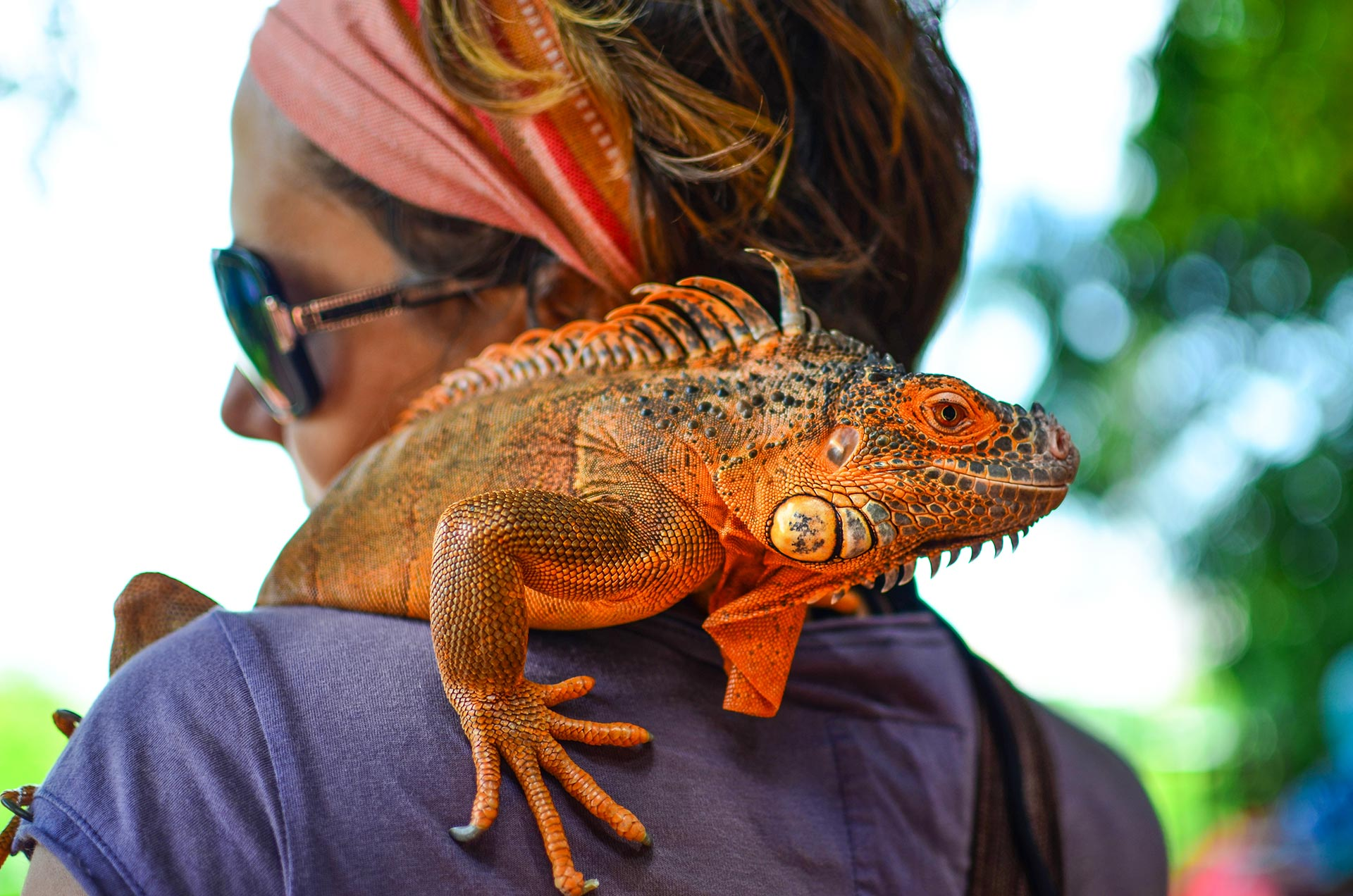 Malaysia and chameleon