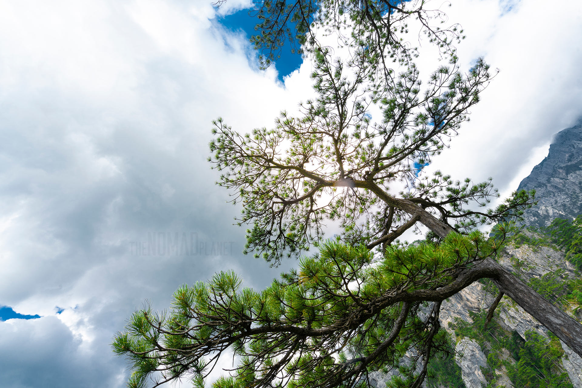 Bosnian Pine, Masna Luka